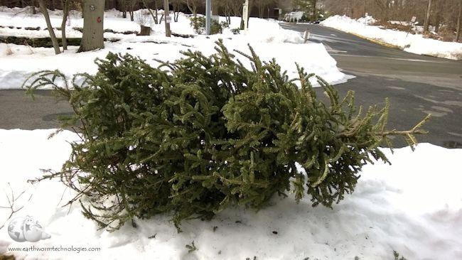 juletræer 2020