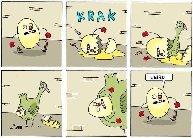 Hvem kom først Hønen eller ægget ? - Hold A